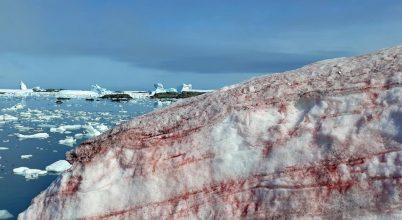Moszatoktól vált vörössé az Antarktisz jege