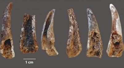 Cápa és delfin húsa is ott volt a neandervölgyiek étlapján