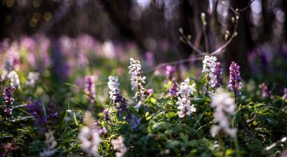 A nap képe: Tavasz az ártéri erdőben
