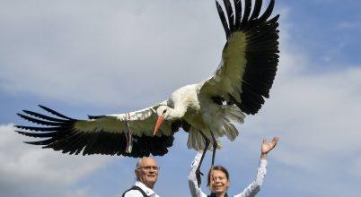 Szabaduló gólyák március idusán
