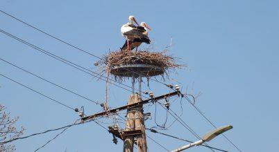 Egyre több biztonságos fészek várja a gólyákat a Kiskunságban