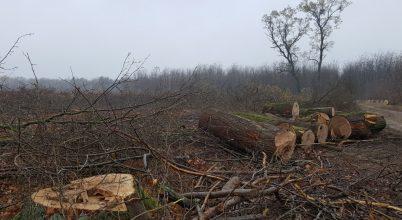 Muszáj minden erdőben fát vágni?