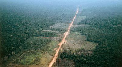 Veszélyben az amazóniai esőerdő élővilága
