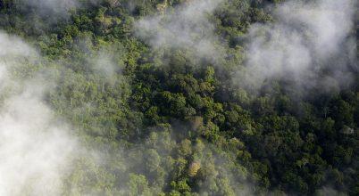 Egyre kevesebb szén-dioxidot nyelnek el az esőerdők