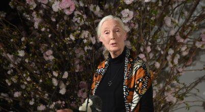 Jane Goodall reményteli videóüzenete a járvány idején
