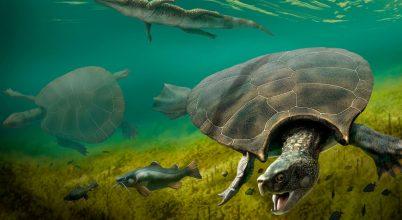 Óriási kajmánok vadászhattak a hatalmas ősteknősökre