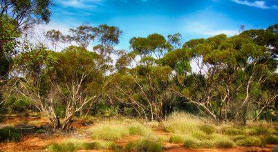 Hosszabbodó ausztrál nyarak