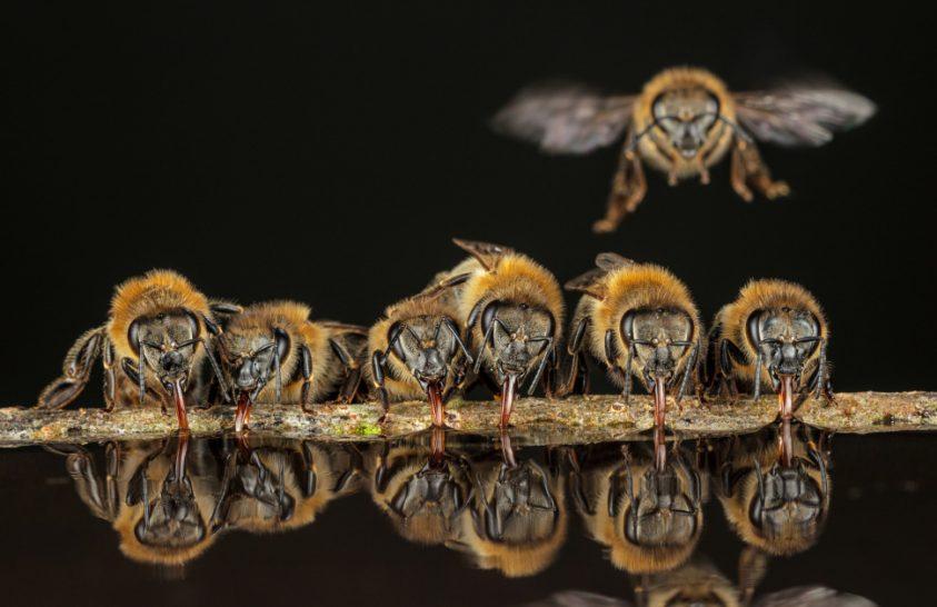 Méhek titkai