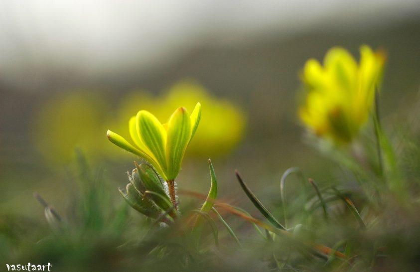 Tihany sárga világító lámpásai
