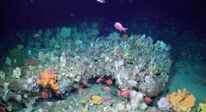 Csodás korallkertek a tenger mélyén