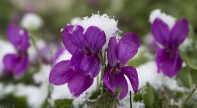 A hópehely súlya alatt