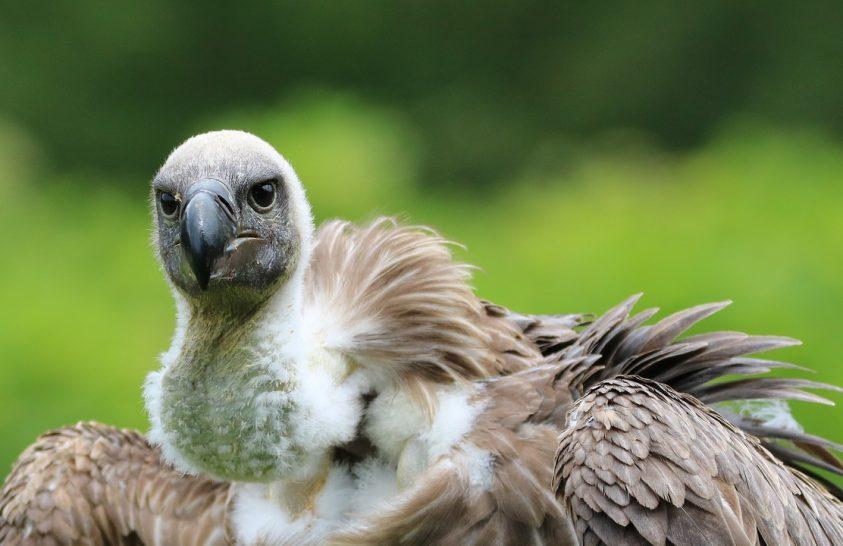 Tömegesen pusztulnak a madarak egy afrikai országban