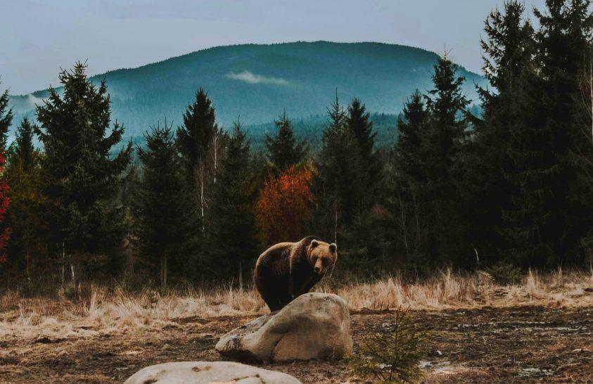 A medve igen otromba állat
