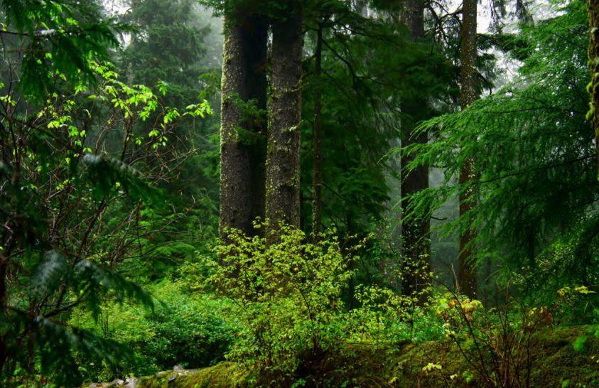 Erdőgazdálkodás a világűrből