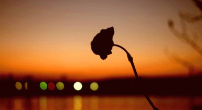 Árva virág