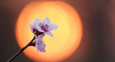 A nap képe: Alkonyat