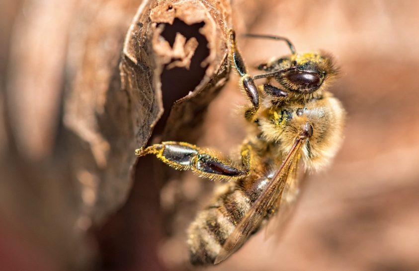 A nap képe: Méhecske