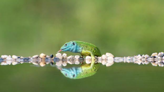 A nap képe: A tükörkép
