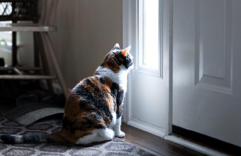 A macskáknak is hiányzik a gazdi, ha egyedül vannak otthon
