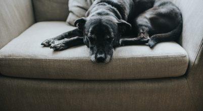 Összefüggés az alvó agy aktivitása és a tanulási képességek között