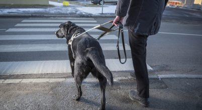 A segítő munkára kiképzett kutyák jók a feladatok megoldásában is