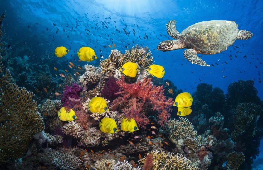 Miért kell védeni az óceánokat?