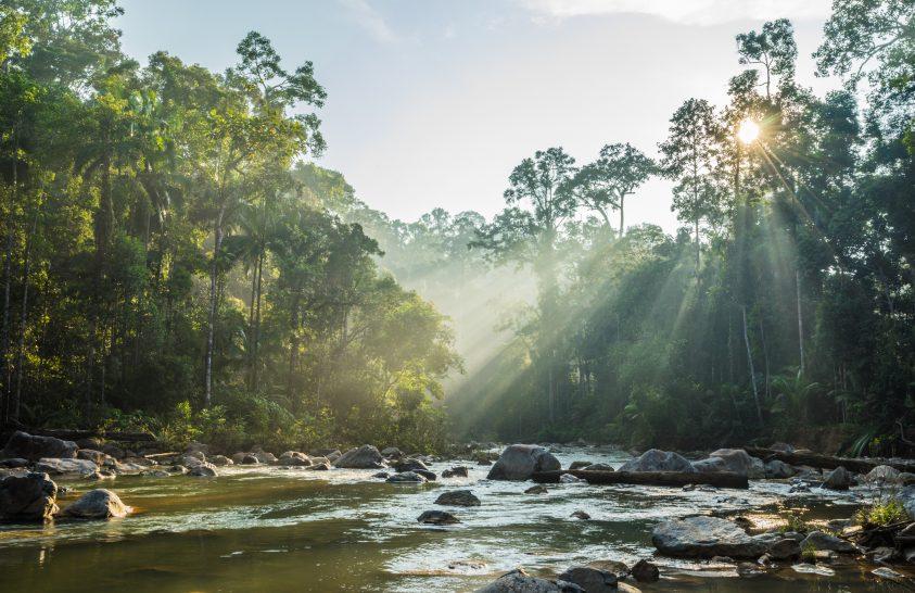 Környezetrombolás, vadállat-kereskedelem és az emberi egészség kapcsolata