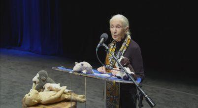 Jane Goodall életéről szóló, különleges alkotás a NatGeo tévén