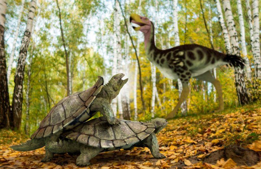 Túlélte a dinoszauruszok kihalását az ősi teknősök utolsó mohikánja