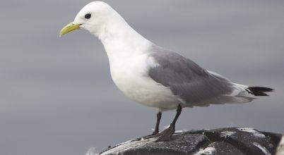 Sarki madaraknak készült hotel Norvégiában
