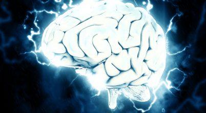Legalább 25 millió évesek a nyelvünkért felelős agyi területek