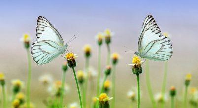Aggasztó a rovarok fogyatkozása, ám az édesvízi fajok helyzete jobbnak tűnik