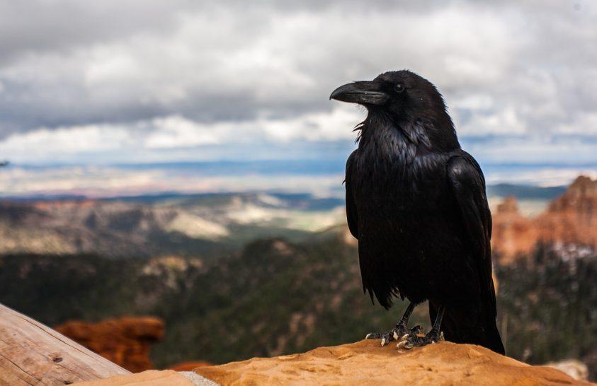 Hogyan lett nagy a madarak agya?