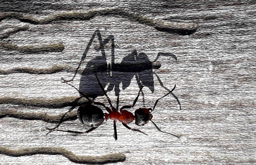 Egy hangya és az árnyéka