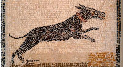 A régészeknek időnként (kutya)piszok nehéz dolguk van