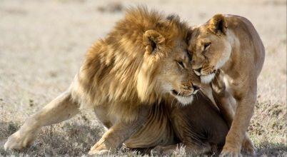A nőstény emlősök tovább élnek, mint a hímek