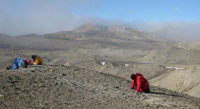 40 millió éves antarktiszi békacsontokat vizsgáltak