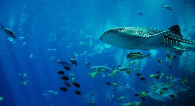 Kísérleti atomrobbantások hatása segíthet a tengeri óriások kormeghatározásában