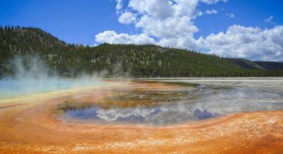 A Yellowstone tavaiból származik a koronavírus-tesztek egyik alapeleme