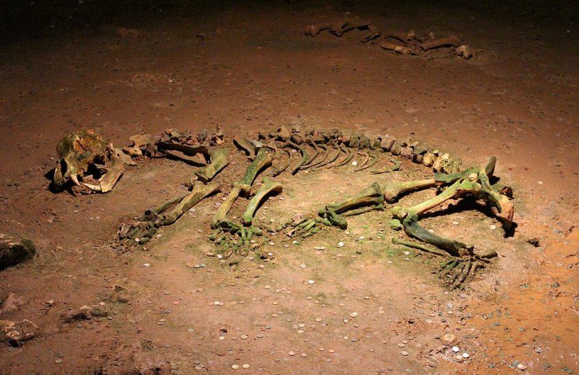 Vegetáriánus ragadozók voltak a barlangi medvék