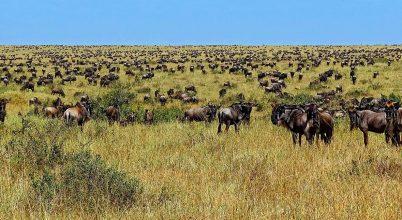 A geológiának is szerepe van a Serengeti vadállománya vándorlásában