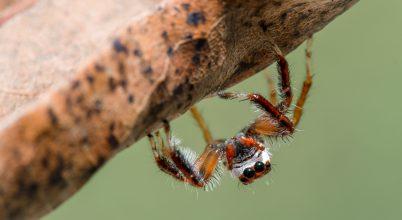 A nap képe: Lóg a pók apóka