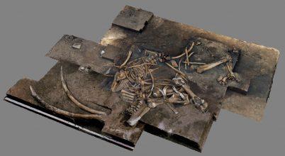 300 ezer éves erdei őselefánt maradványokat találtak