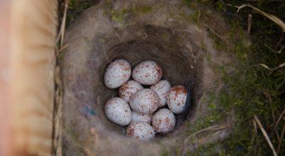 Hasonlít egymásra, mint két tojás – vagy mégse?