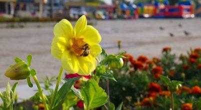 Nagyvárosi méhlegelők