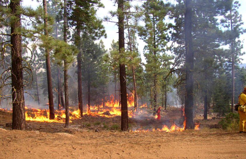 Az erdők irtása súlyosbította az ausztrál bozóttüzek hatását