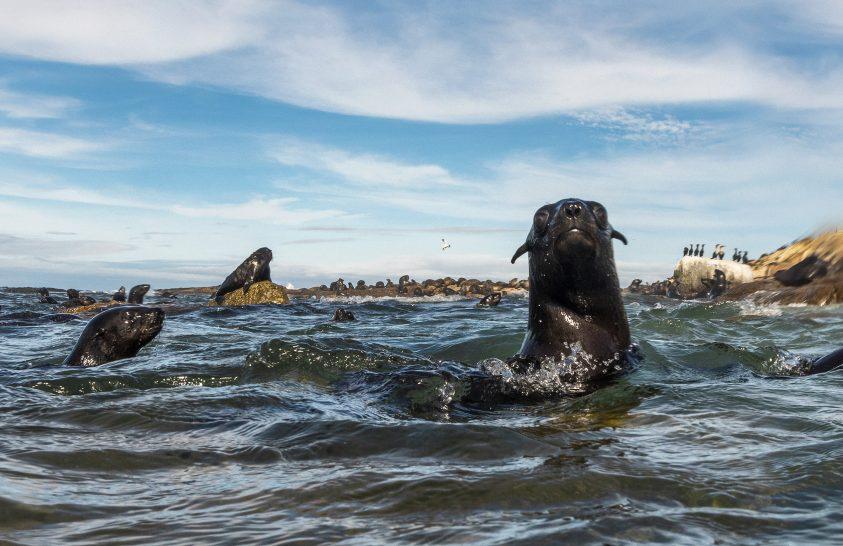 Pezsgő élet Dél-Afrika partjainál