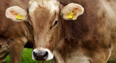 A meggondolatlan mezőgazdaság is növeli a járványok esélyét