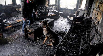 A kutyák ismét bizonyosságot tettek kiváló szaglásukról