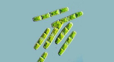 Algagének segítik megérteni az első szárazföldi növényeket